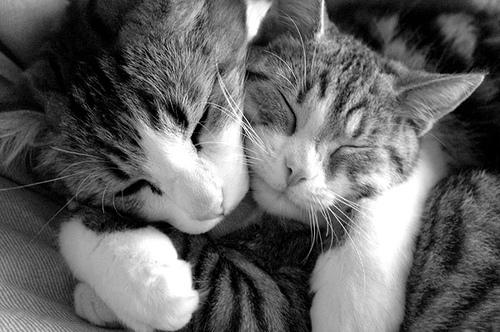 Es más que vivir juntos